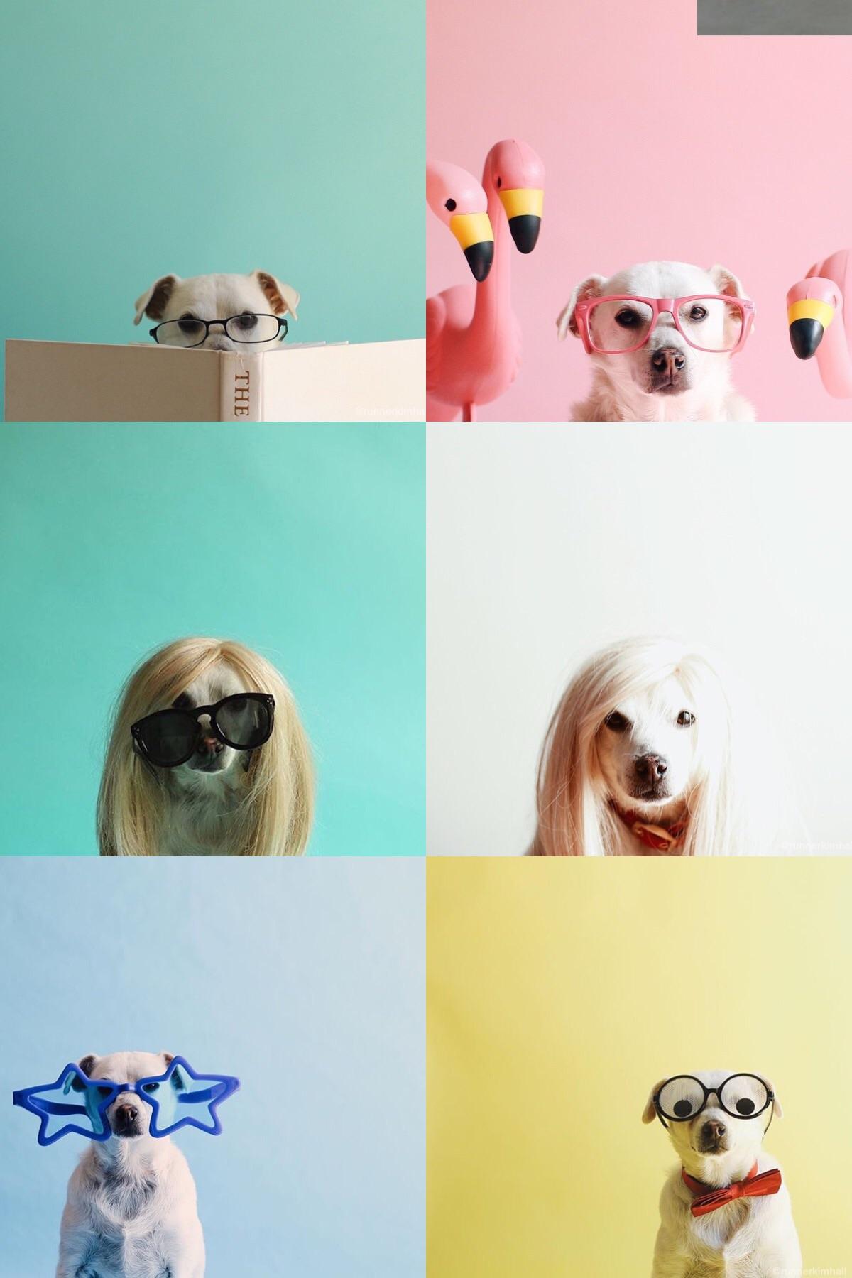 funkymix-italianbark-dog fun