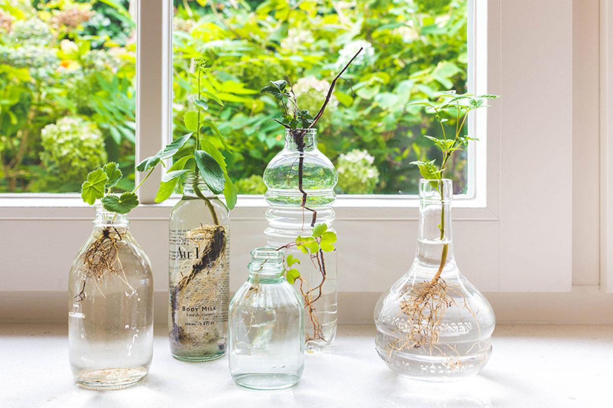 rooting plants in water, glass vases trend, round vases glass, green trend, italianbark interior design blog