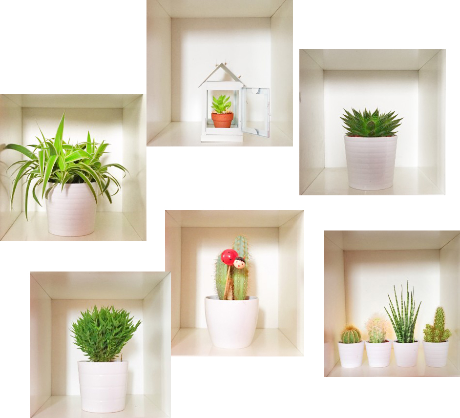#urbanjunglebloggers #plantshelfies