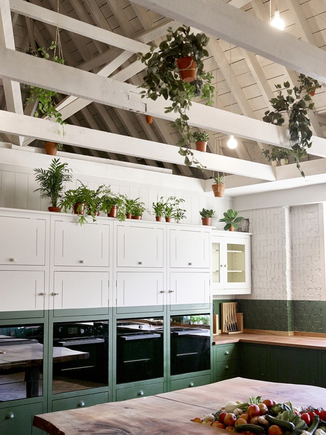 kitchen-green-plants