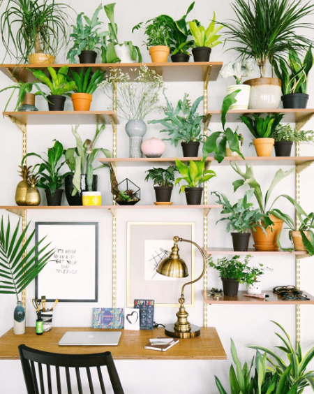 decorate home with plants - 2