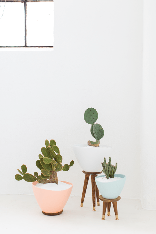 decorate-home-with-plants-4