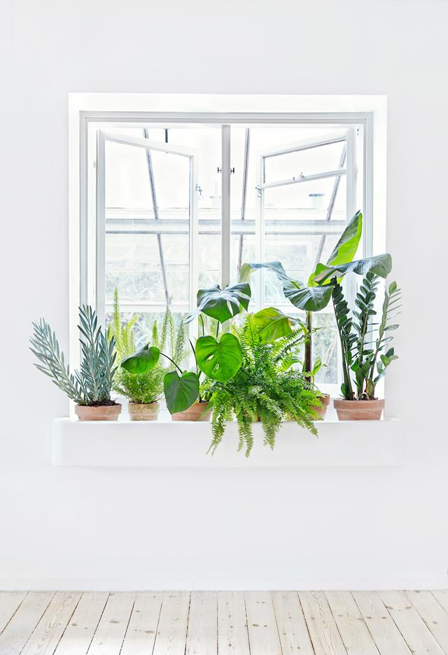 decorate-home-with-plants-5-
