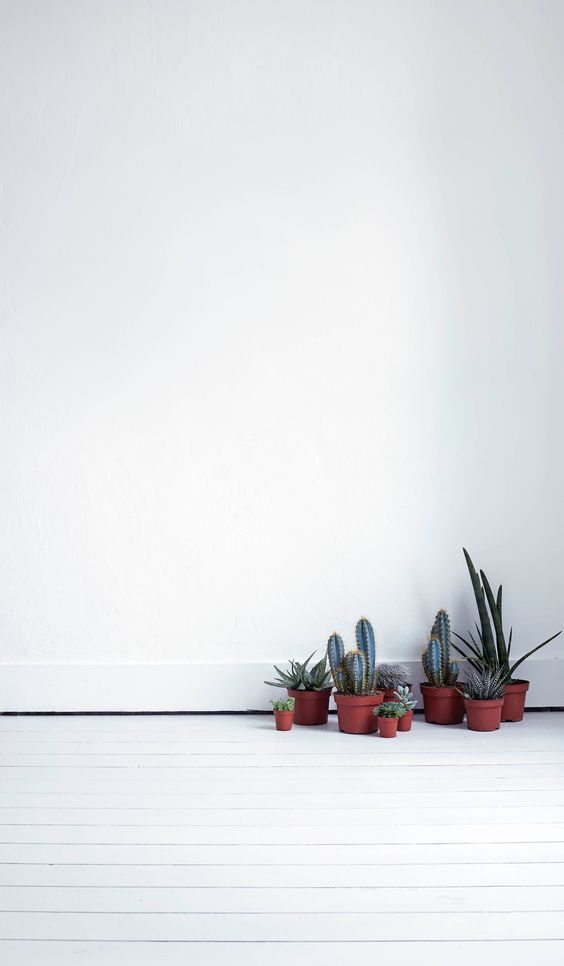 decorate-home-with-plants-cacti