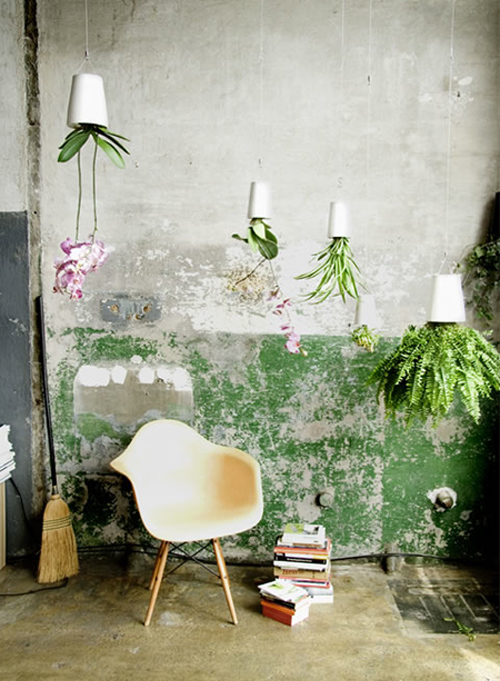 decorate-home.with-plants-hanged