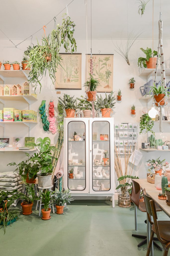 decorate-with-plants-3