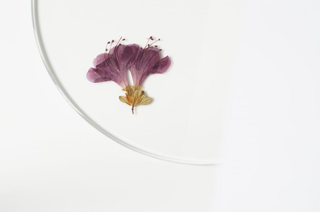 evergreen-platters-meike-harde13