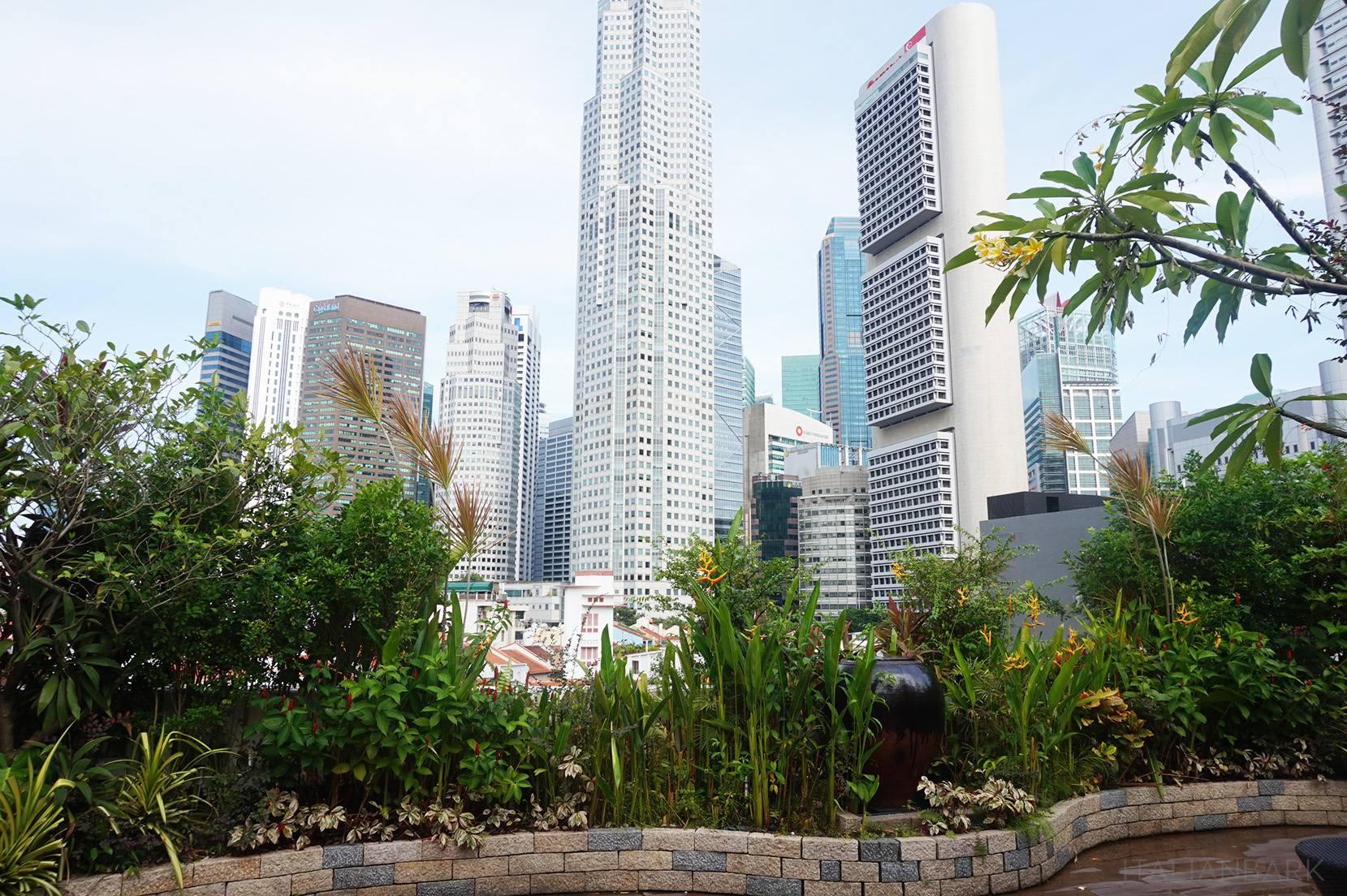 CLOVERTHEARTS-SINGAPORE-2