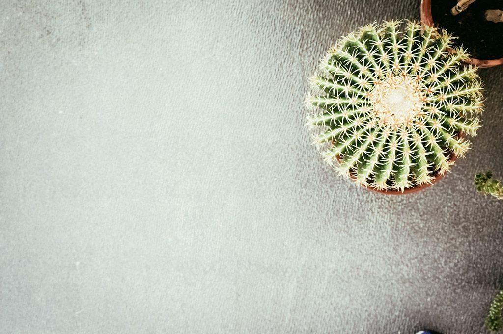 ortobotanico padova, urban jungle bloggers, cacti, cactus, succulents, succulents interior, succulents styling, italianbark-interior design blog