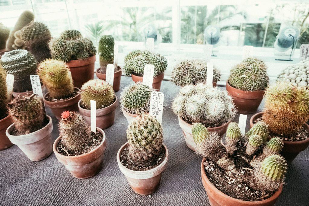 orto-botanico-ok-6