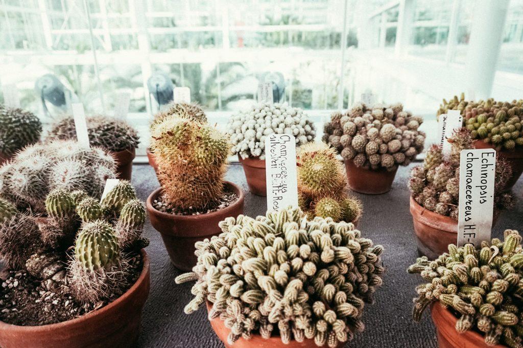 orto-botanico-ok-7