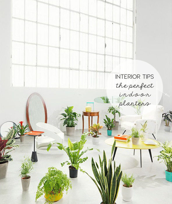 indoor planters, indoor plants, green design, choose the plant vase, italianbark interior design blog, diy vase, black white vase