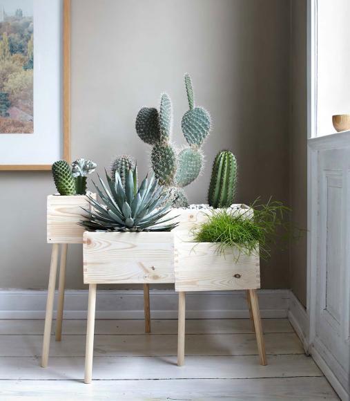 kactus