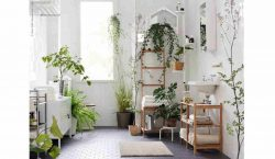 Top Plants That Thrive In Your Bathroom