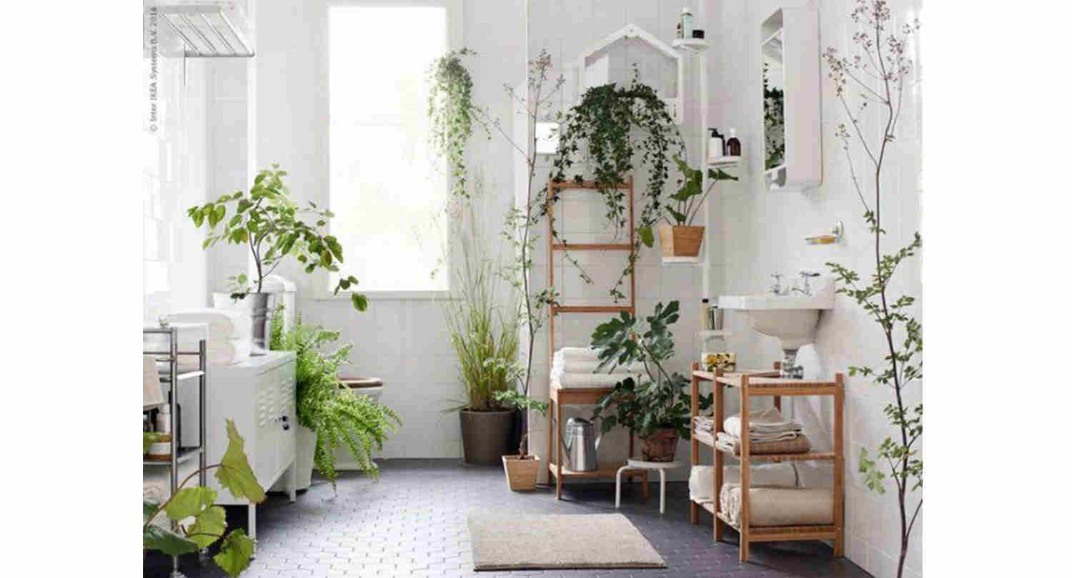 best bathroom plants, wet rooms plants, green bathroom design, italianbark interior design blog